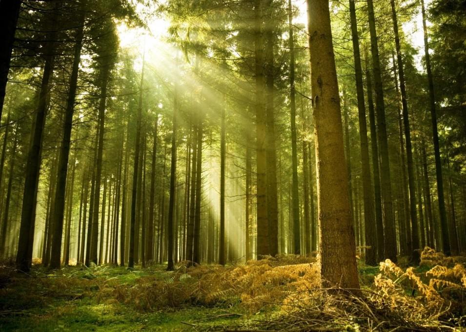 Cuidamos el medio ambiente. Vitrokitchen